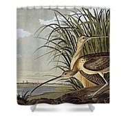 Male And Female Long Billed Curlew Shower Curtain