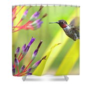 Male Anna's Hummingbird Shower Curtain by Mike Herdering