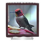 Male Anna's Hummingbird On Feeder Perch Shower Curtain