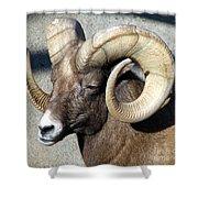 Male Bighorn Sheep Ram Shower Curtain