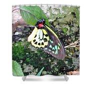 Male Birdwing Butterfly Shower Curtain