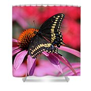 Male Black Swallowtail Butterfly On Echinacea Plant Shower Curtain