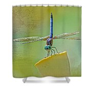 Male Blue Dasher Dragonfly Shower Curtain