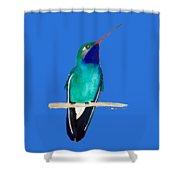Male Broad-billed Hummingbird Shower Curtain