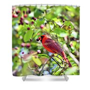 Male Cardinal And His Berry Shower Curtain by Kerri Farley