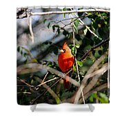 Male Cardinal II Shower Curtain
