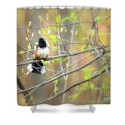 Male Eastern Shower Curtain