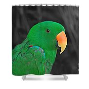 Male Eclectus Shower Curtain