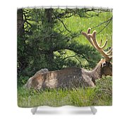 D10271-male Elk 2  Shower Curtain