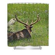 D10270-male Elk  Shower Curtain