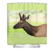 Male Elk Shower Curtain
