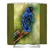 Male Fairy Bluebird Shower Curtain
