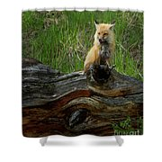 Male Fox-signed   #3569 Shower Curtain