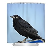 Male Grackle Shower Curtain