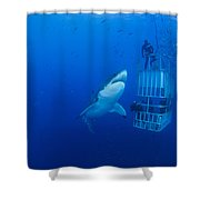 Male Great White With Cage, Guadalupe Shower Curtain