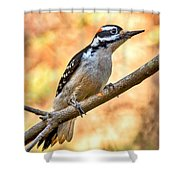 Male Hairy Woodpecker Shower Curtain