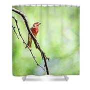 Male House Finch Out On A Limb Shower Curtain