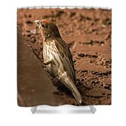 Male House Finch V10 Shower Curtain