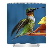 Male Hummingbird Spreading Wings Shower Curtain