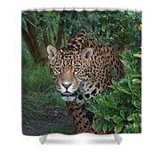Male Leopard Shower Curtain