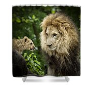 Male Lion And Cub Shower Curtain