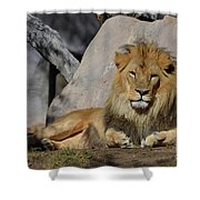Male Lion Resting In The Warm Sunshine Shower Curtain