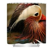 Male Mandarin Duck China Shower Curtain