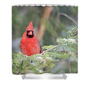 Male Northern Cardinal 2 Shower Curtain