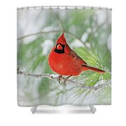 Male Northern Cardinal In Winter - 2 Shower Curtain