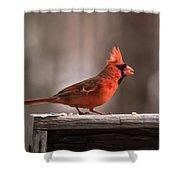 Male Northern Cardinal Winter New Jersey  Shower Curtain