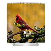 Male Northern Red Cardinal Shower Curtain