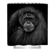 Male Orangutan Black And White Portrait Shower Curtain