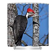 Male Pileated Woodpecker 6340 Shower Curtain