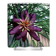 Male Ponderosa Pine Cones Shower Curtain