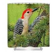 Male Red Bellied Woodpecker In A Tree Shower Curtain