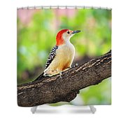 Male Red-bellied Woodpecker Shower Curtain