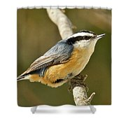 Male Red Breasted Nuthatch 2151 Shower Curtain
