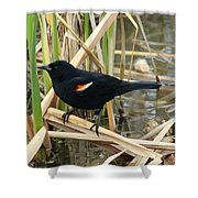 Male Red Winged Blackbird Shower Curtain