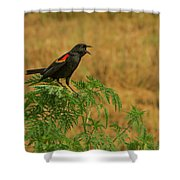 Male Red-winged Blackbird Singing Shower Curtain