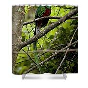 Male Resplendent Quetzal Shower Curtain