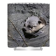 Male River Otter Shower Curtain