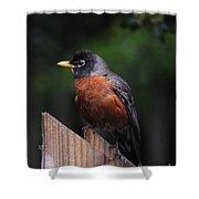 Male Robin Shower Curtain
