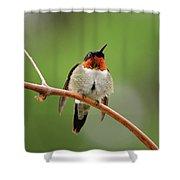 Male Ruby Throated Hummingbird Shower Curtain