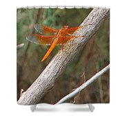 Male Skimmer Dragonfly Shower Curtain