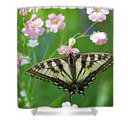 Male Tiger Swallowtail 5416 Shower Curtain
