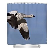 Male Upland Goose Shower Curtain