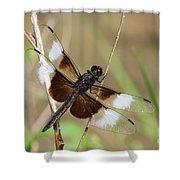 Male Widow Skimmer Dragonfly #3 Shower Curtain