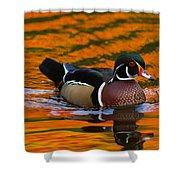 Male Wood Duck, Aix Sponsa, Swimming Shower Curtain