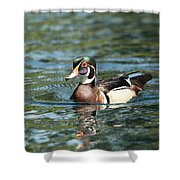 Male Wood Duck Shower Curtain