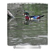 Drake Wood Duck On Pond Shower Curtain